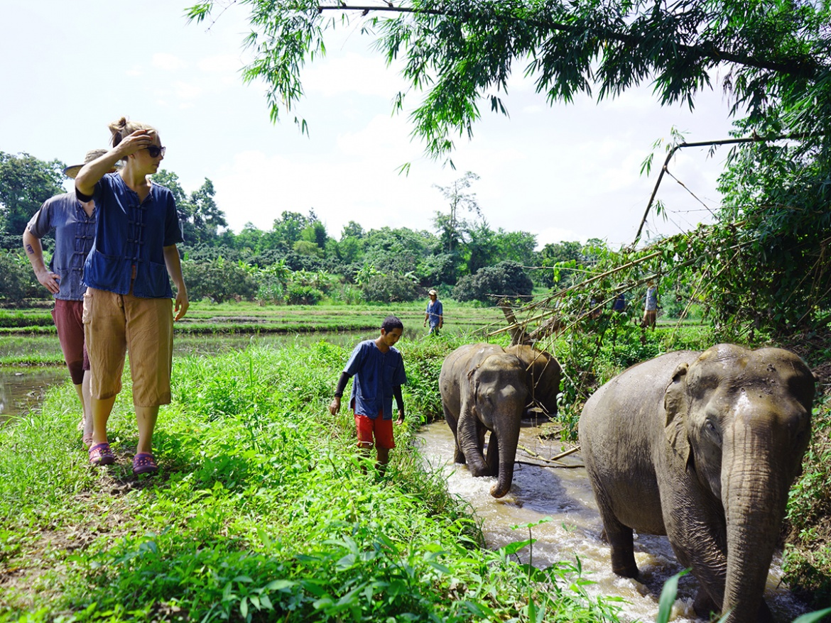 HALF DAY ETHICAL LANNA KINGDOM ELEPHANT SANCTUARY TOUR ( CRUELTY- FREE & NO RIDING )