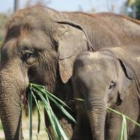Our Lanna Kingdom Elephant Sanctuary :-)